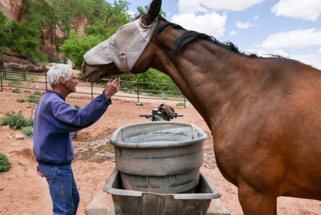 Best Friends Animal Sanctuary Horse Haven