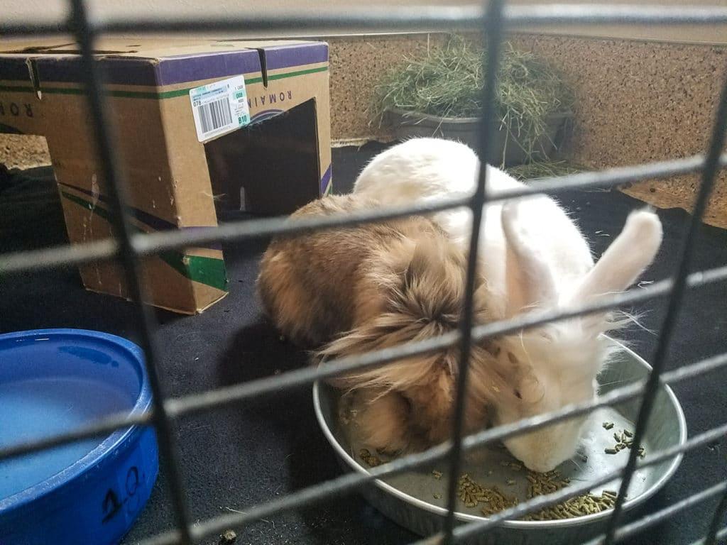 Best Friends Animal Society Bunny House
